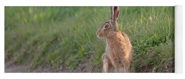 Brown Hare Listening Yoga Mat
