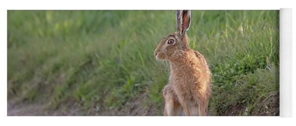 Brown Hare Listening Yoga Mat