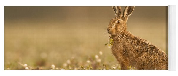 Brown Hare  Yoga Mat