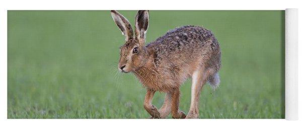 Brown Hare Running Yoga Mat