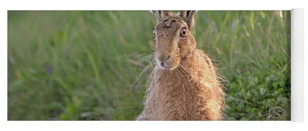 Brown Hare Sat On Track At Dawn Yoga Mat