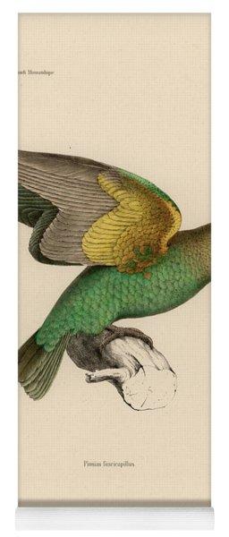 Brown-headed Parrot, Piocephalus Cryptoxanthus Yoga Mat
