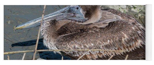 Brown Pelican 3 March 2018 Yoga Mat