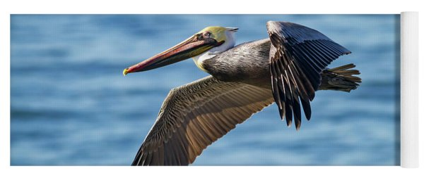 Brown Pelican In Flight Yoga Mat