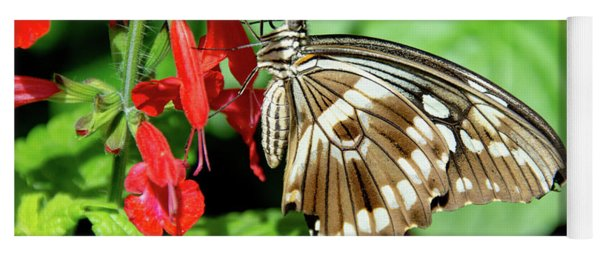 Brown Swallowtail Butterfly Yoga Mat