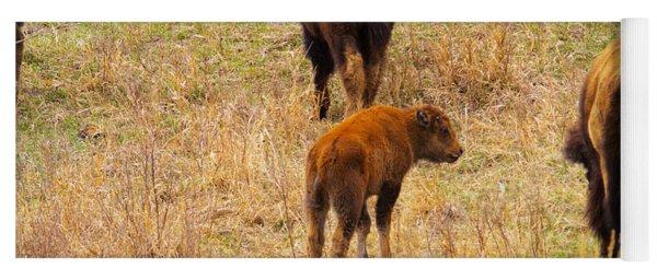 Buffalo Calf In The Dakotas Yoga Mat