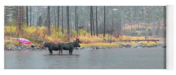 Bull And Cow Moose In East Rosebud Lake Montana Yoga Mat