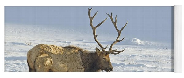 Bull Elk In Snow Yoga Mat