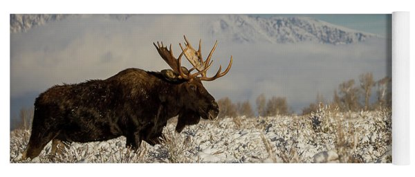 Bull Moose, Grand Teton National Park Yoga Mat
