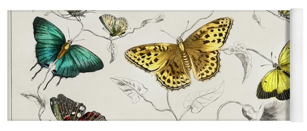 Butterflies From A History Of The Earth And Animated Nature Yoga Mat