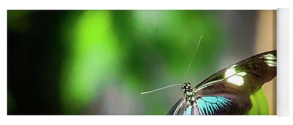 Yoga Mat featuring the photograph Butterfly At Cleveland Botanical Gardens by Richard Goldman