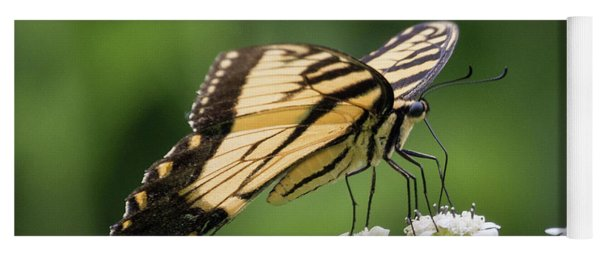 Butterfly Drinking Yoga Mat