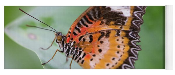 Yoga Mat featuring the photograph Butterfly On The Edge Of Leaf by John Wadleigh