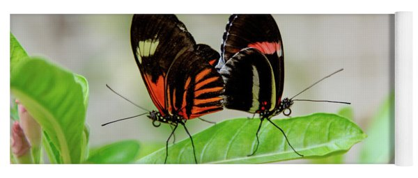 Butterfly Pair Yoga Mat