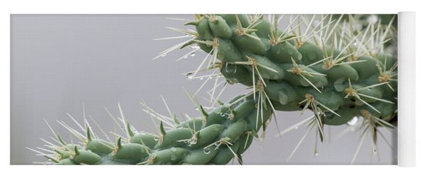 Cactus Branch With Wet White Long Needles Yoga Mat