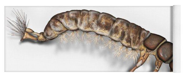 Caddisfly Larva Nymph Psychomiidae Hydropsyche Pellucidula -  Yoga Mat