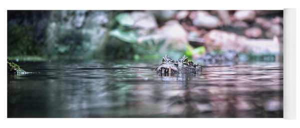 Yoga Mat featuring the photograph Caiman by Traven Milovich