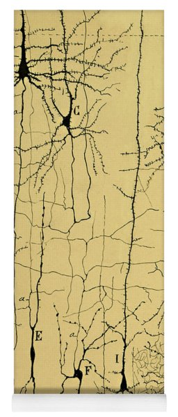 Cajal Drawing Of Microscopic Structure Of The Brain 1904 Yoga Mat
