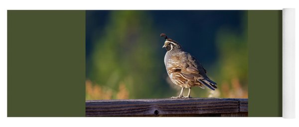 California Quail Yoga Mat