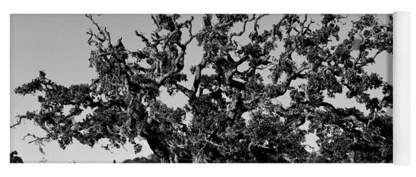 California Roadside Tree - Black And White Yoga Mat