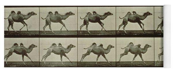 Camel Yoga Mat