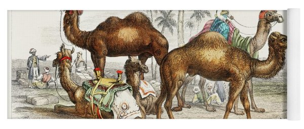 Camels From A History Of The Earth And Animated Nature Yoga Mat