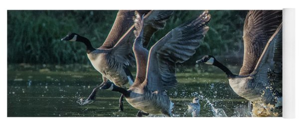 Canada Geese 4983-092017-1cr Yoga Mat
