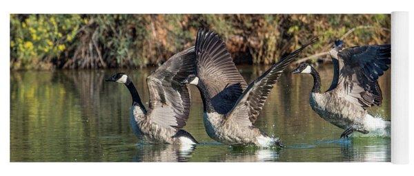 Canada Geese 5659-092217-1cr-p Yoga Mat