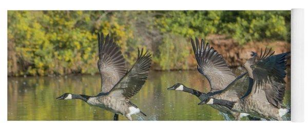 Canada Geese 5666-092217-1cr Yoga Mat