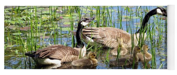 Canada Geese Family On Lily Pond Yoga Mat