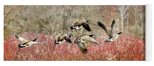 Canada Geese In Flight Yoga Mat
