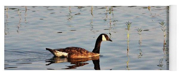 Canada Goose In Morning Light Yoga Mat