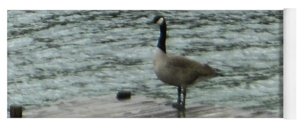 Yoga Mat featuring the photograph Canada Goose Lake Dock by Rockin Docks Deluxephotos