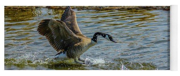 Canada Goose Takes Flight, Frank Lake, Alberta, Canada Yoga Mat