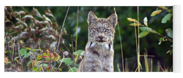 Canadian Lynx Yoga Mat