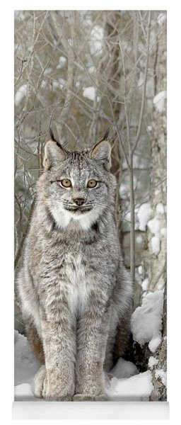 Canadian Wilderness Lynx Yoga Mat