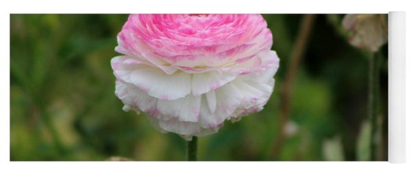 Candy Stripe Ranunculus Yoga Mat