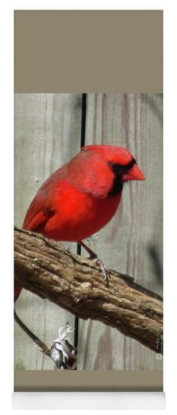 Cardinal Waiting For Spring Yoga Mat