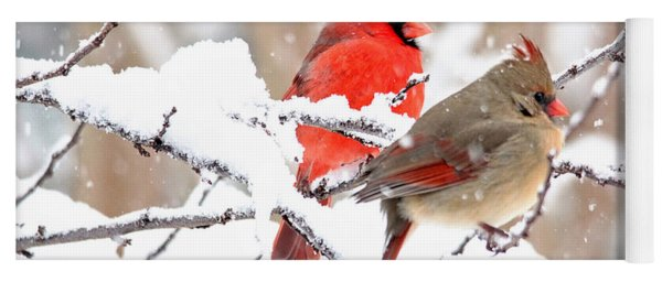 Cardinals In The Winter Yoga Mat
