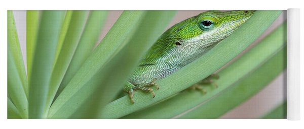 Carolina Anole Yoga Mat