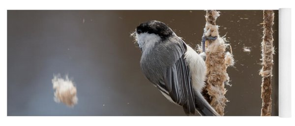 Carolina Chickadee Feeding On Cattail Yoga Mat