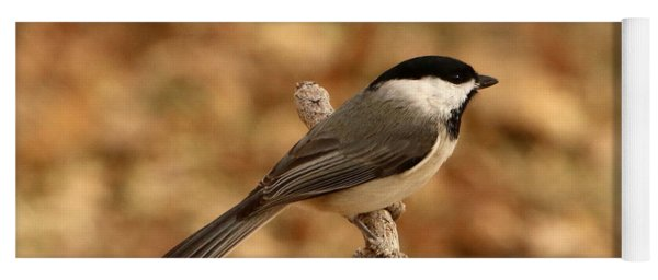 Carolina Chickadee On Branch Yoga Mat