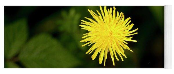 Catsear Flower. Yoga Mat