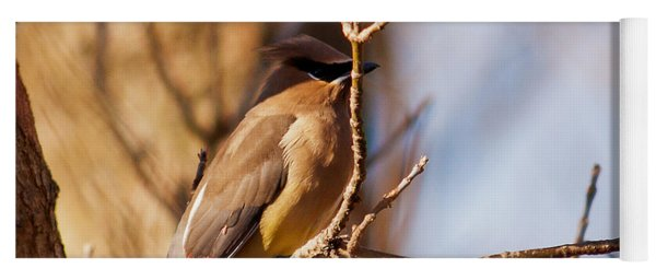 Cedar Waxwing In Autumn Yoga Mat