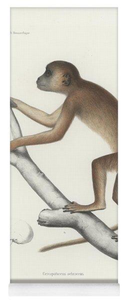 Central Yellow Baboon, Papio C. Cynocephalus Yoga Mat