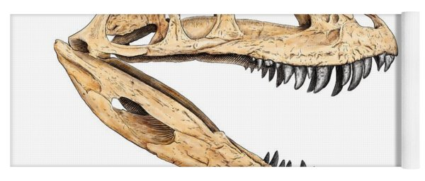 Ceratosaur Skull Yoga Mat