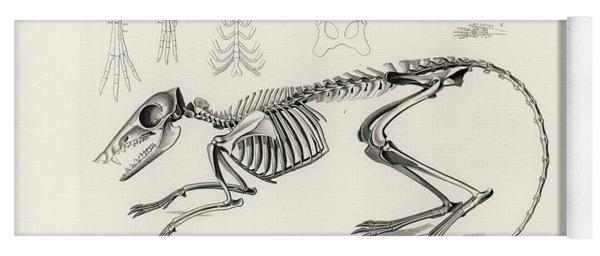 Checkered Elephant Shrew Skeleton Yoga Mat