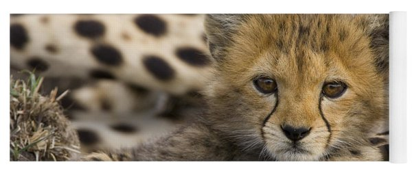 Cheetah Cub Portrait Yoga Mat