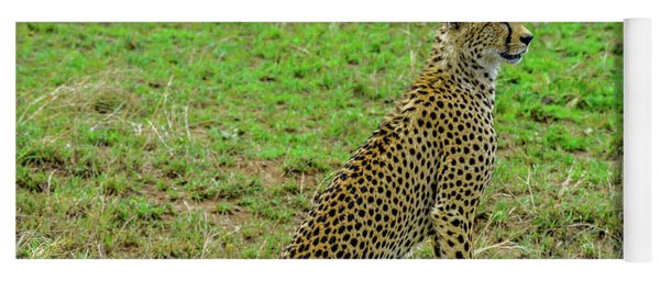 Cheetah On The Serengeti Yoga Mat