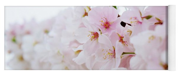 Yoga Mat featuring the photograph Cherry Blossom Focus by Nicole Lloyd